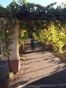 Castoro Cellars walkway