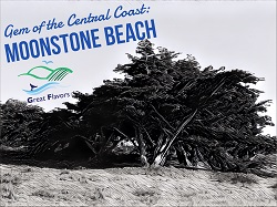Moonstone Beach, the Gem of the Central Coast (Cambria)