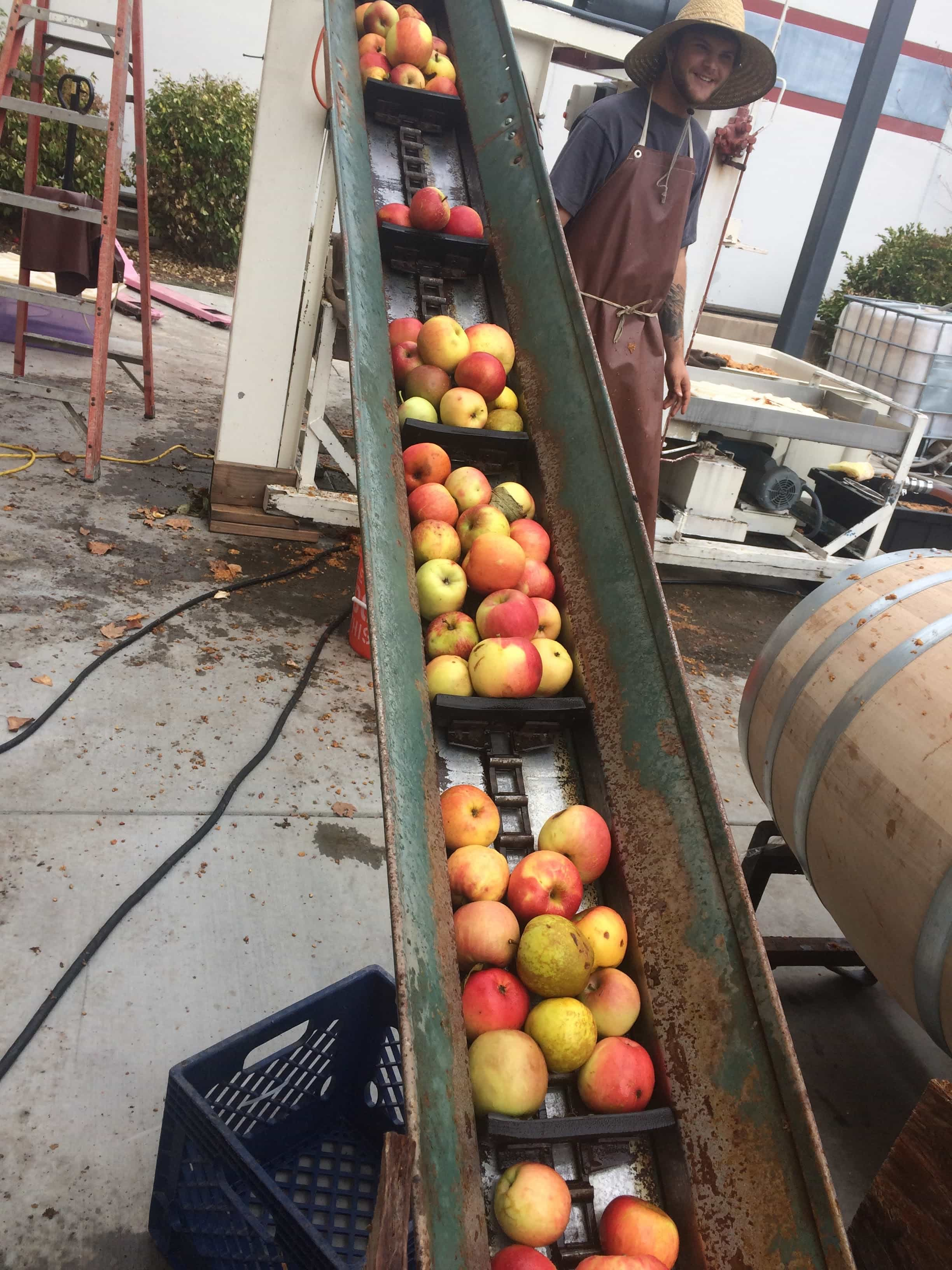 apples on conveyor